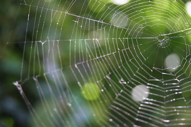 Spider Web climate change wicked problem