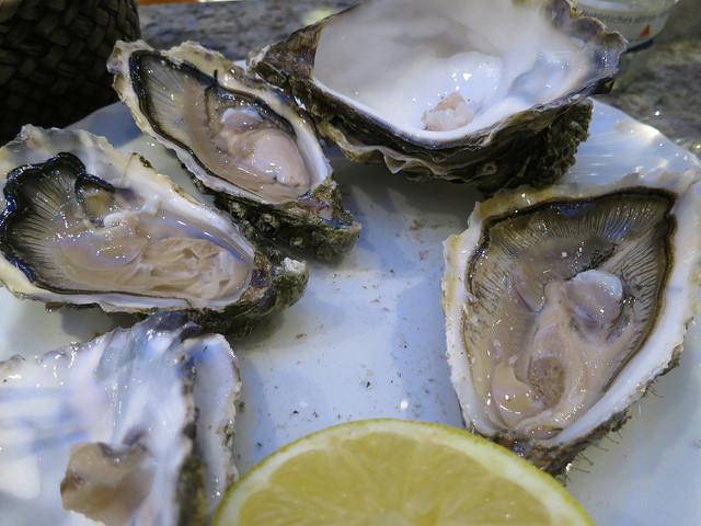 oysters chesapeake bay raw flooding climate change